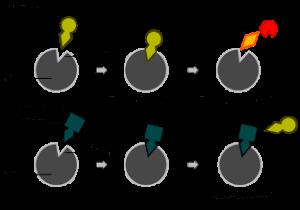 inhibitor-enzim