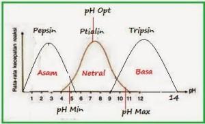 pengaruh-ph-terhadap-enzim