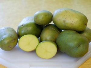 kentang hijau