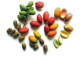 kandungan-nutrisi-dan-manfaat-melinjo